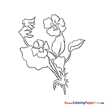 Image Flower Colouring Sheet download free
