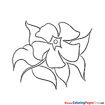 Image Flower for free Coloring Pages download