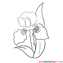 Picture printable Coloring Pages for free