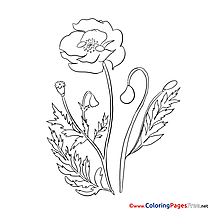 Poppy Children Coloring Pages free