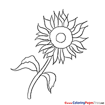 Sunflower Coloring Sheets download free