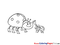 Ladybugs Colouring Sheet download free