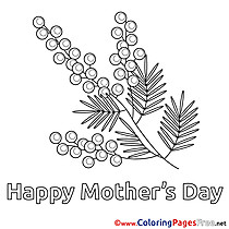 Mimosa for Kids Mother's Day Colouring Page