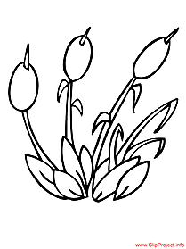 Plants coloring page reeds