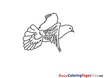 Colouring Page Pigeon Pentecost free