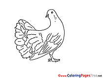 Free Pentecost Pigeon  Coloring Sheets