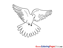 Illustration Pigeon Pentecost Colouring Sheet free