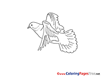 Image Pigeon printable Pentecost Coloring Sheets