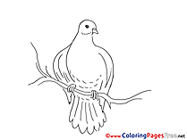 Kids Pentecost Coloring Pages Pigeon
