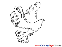 Pentecost Coloring Pages Pigeon download