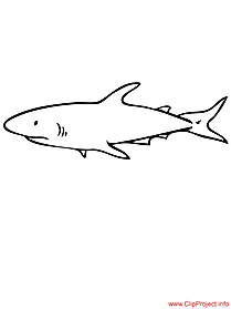 Shark coloring page free