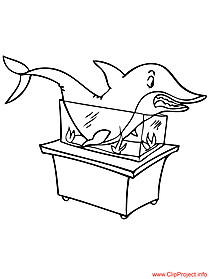 Shark image to color