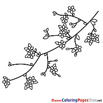 Branch Spring Colouring Sheet free