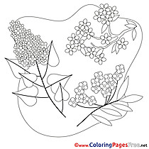 For Kids Spring Colouring Page Flowers free
