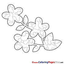 Illustration Flower Spring Colouring Sheet free