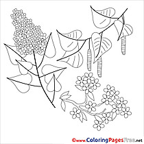 Lily printable Spring Coloring Sheets