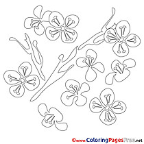 Nenuphar Coloring Pages Spring