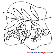 Rowan Coloring Pages Spring