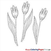 Tulips free Spring Coloring Sheets
