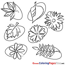 Leaves for Kids Summer Colouring Page