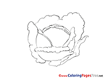 Cabbage for free Coloring Pages download