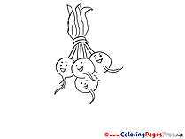 Radish Coloring Pages for free