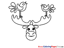 Deer Birds free printable Coloring Sheets