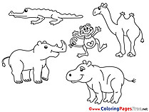 Zoo Animals  Coloring Sheets download free